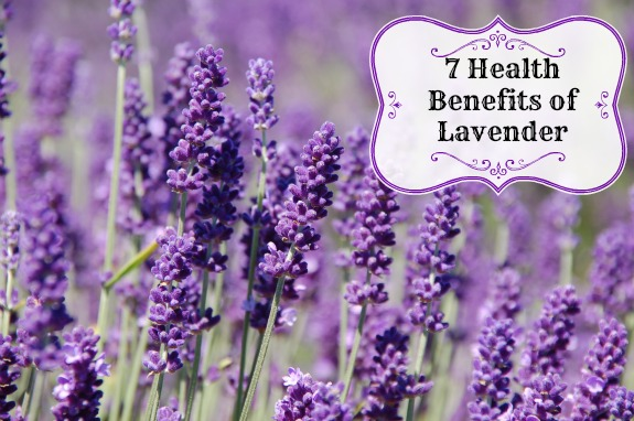7 health Benefits of Lavender