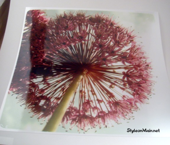 Dandelion Print for Mothers Day gift ideas