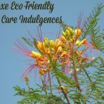 Luxe Eco Friendly Skin Care Indulgences