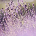5 Amazing Benefits of Aromatherapy